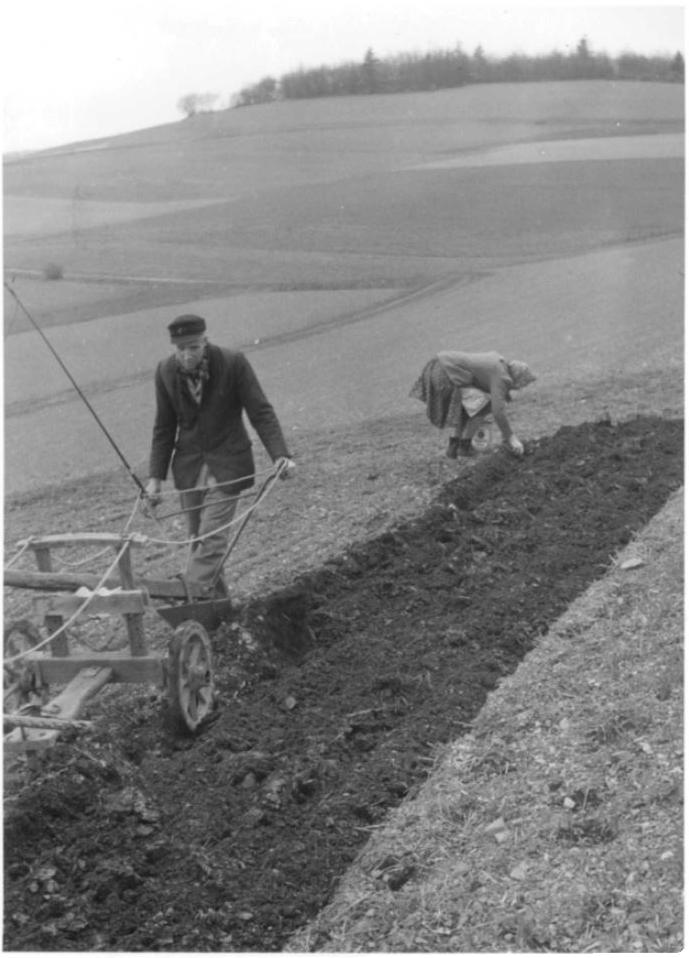 Rudolf Hellwig bei der Feldbestellung